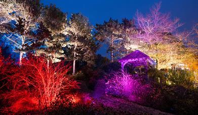 Glow at RHS Garden Hyde Hall