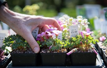 A three-day seasonal plant show at RHS Hyde Hall