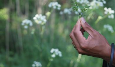 Foraging With The Pines