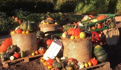 Pumpkins on a cart