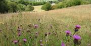 Langdon meadows