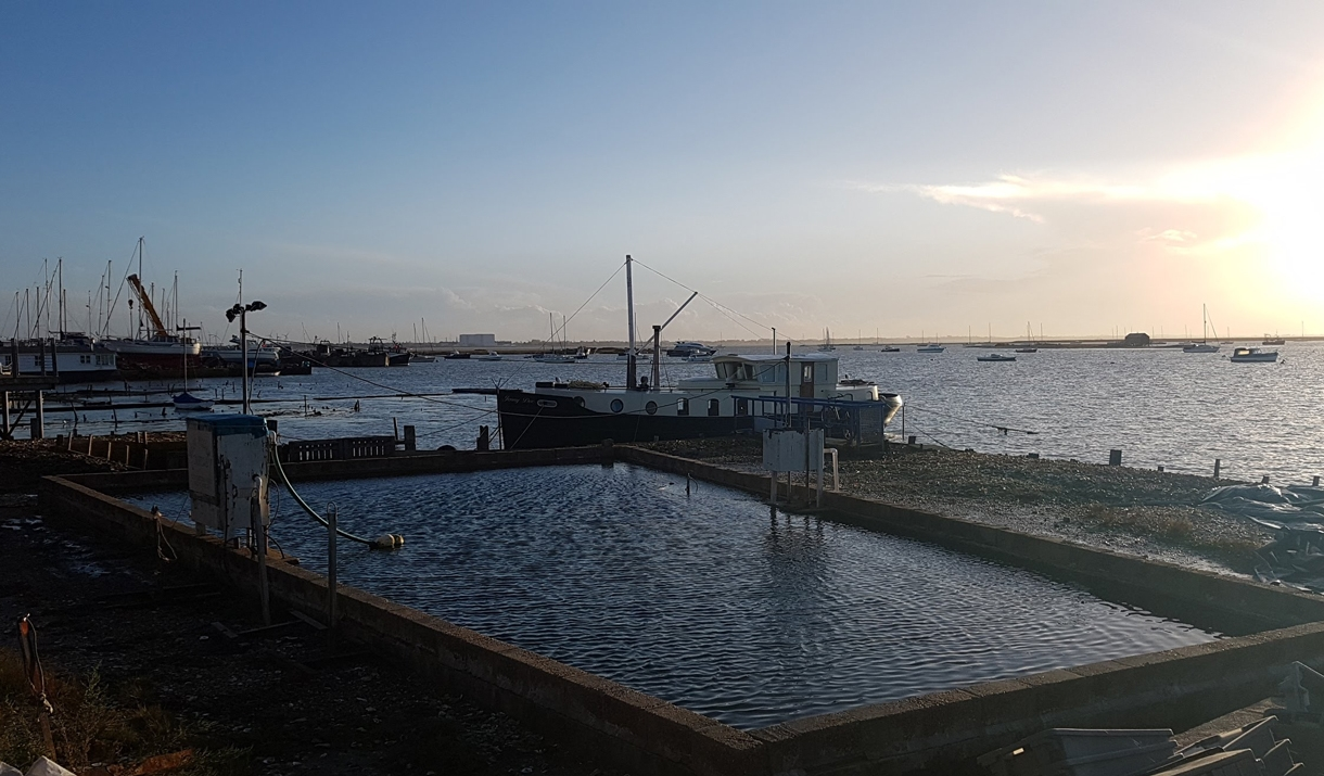 Mersea Oyster Beds