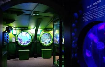 Sealife Adventure aquarium