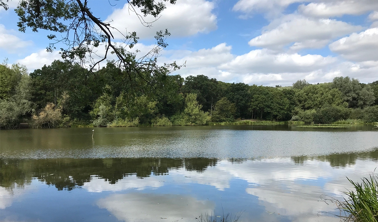 Old Hall Pond, Thorndon Country Park