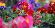 Close up shot of pink red and blue flowers