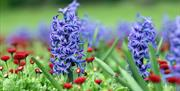 Close up shot of blue and red flowers