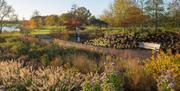 Discover autumn colour in the Winter Garden