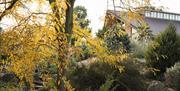 The Dry Garden in autumn