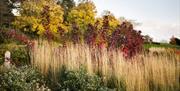 Autumn colours on Clover Hill