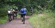 A group of mountain cyclists ride through the Forest near Chingford.