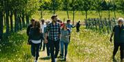 Guests walk through Saffron Grange Vineyard on one of its tours and tasting experiences.