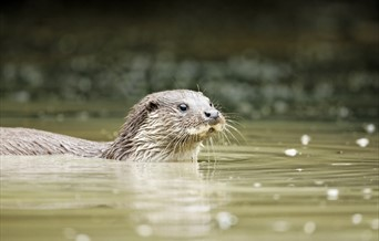 Otter Discovery Trail