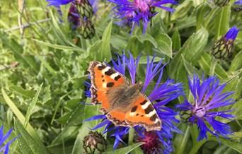 Butterfly Maldon wick meadow