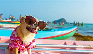Pet friendly rooms at Holiday Inn Southend