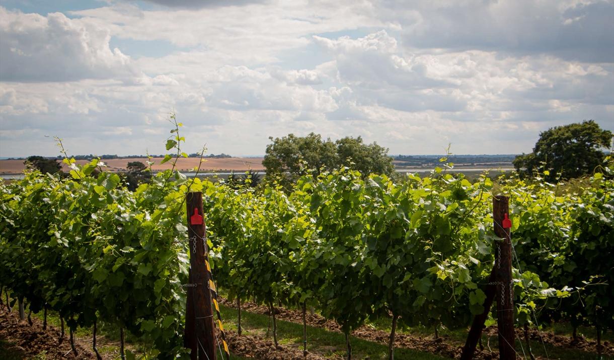 Crouch Ridge Vineyard