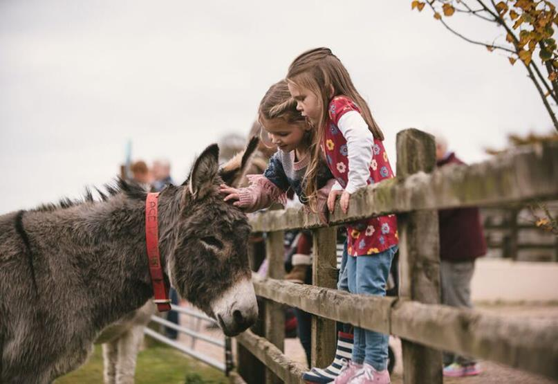 Family Friendly Attractions in Exeter