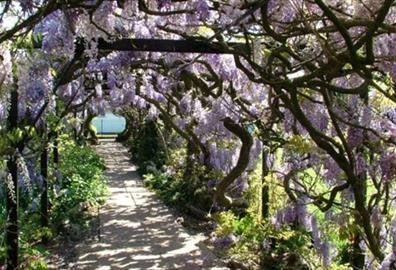 Soaking up the sun in Exeter's gardens this National Gardening Week