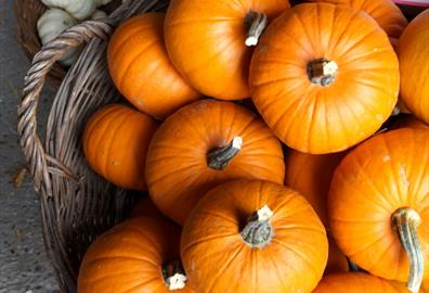 Fang-tastic Halloween Events and Activities in Exeter