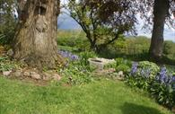 Exe Valley Bed and Breakfast: garden