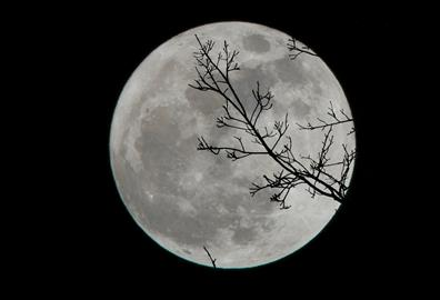 White full moon with outline of a tree branch