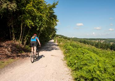Cyclist on Haldon Forest Cycle Trail