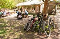 Group of bicycles by the forest cafe