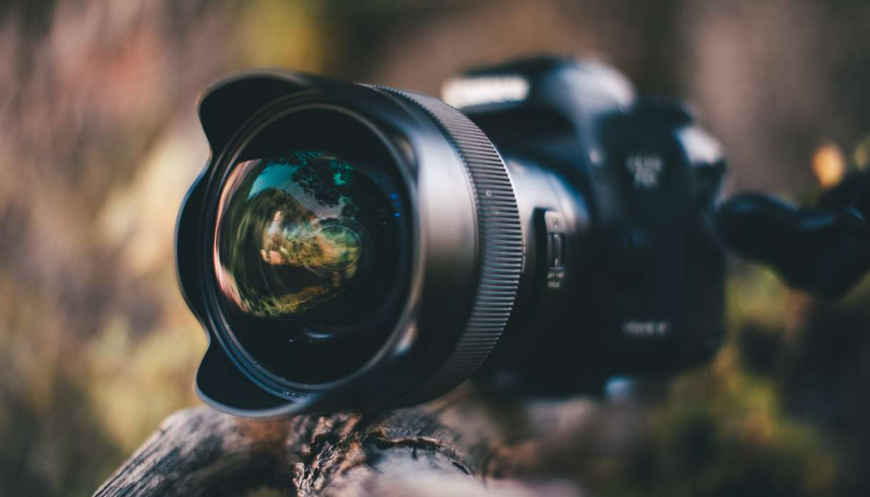 Large camera on wooden branch