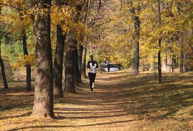 Person running in autumnal forest