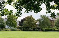 Image of Bury Meadow taken under a tree