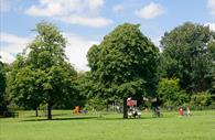 Trees in Bury Meadow