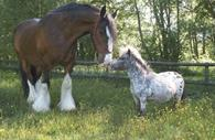 A horse and pony; Buster and Chico
