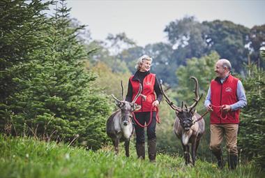 Cotley Farm Christmas Experience