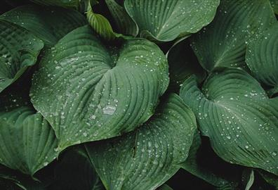 Green plants with water droplets on leaves