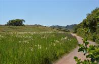 Dawlish Warren Nature Reserve pathway