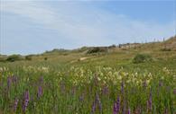 Dawlish Warren Nature Reserve fields