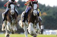 Devon Day race