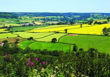 East Devon countryside in the sun