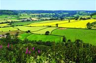 East Devon countryside in the sun