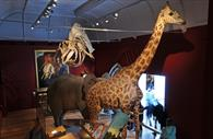 Image of Gerald the giraffe at RAMM