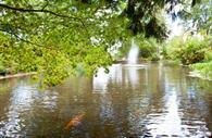 University of Exeter pond