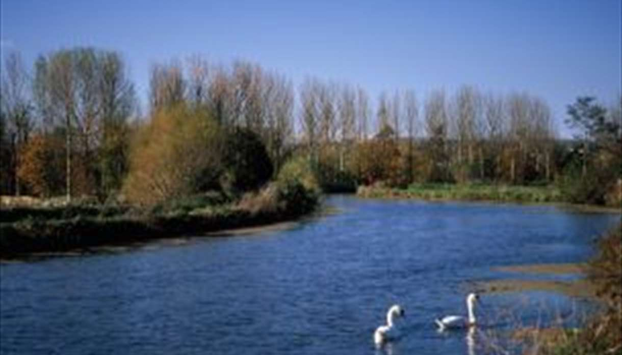 Exeter Canal - with Swans