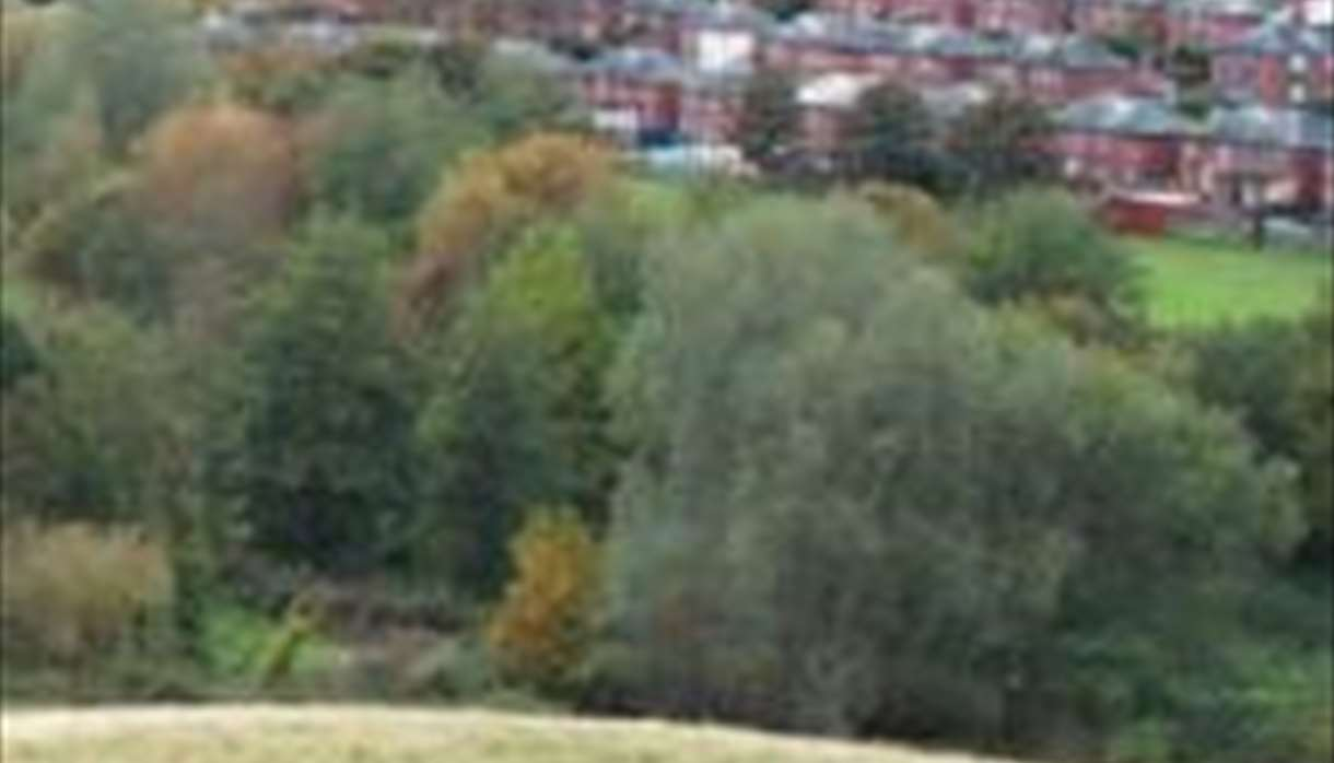 Ludwell Valley Park view