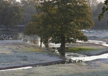 Matford Marsh landscape