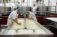 Kneading cheese