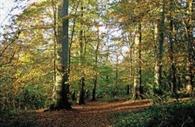 Stoke Woods, Exeter