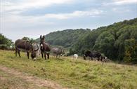Donkeys grazing happily in their paddocks