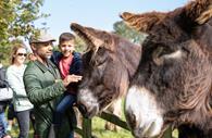 Family meets giant Poitou donkeys