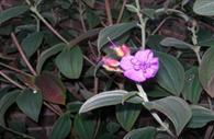 University of Exeter Garden: flower