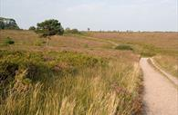 Woodbury Common