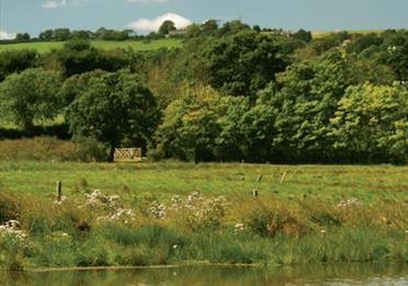 Axe Estuary Wetlands